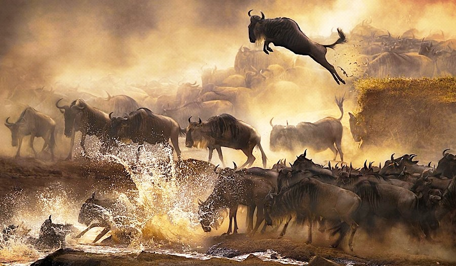8th Wonder of the world, Wildebeest Migration